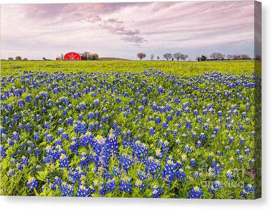 Prairie Sunsets Canvas Print - Bluebonnets And Red Barn In Washington County - Chappell Hill - Brenham - Texas by Silvio Ligutti