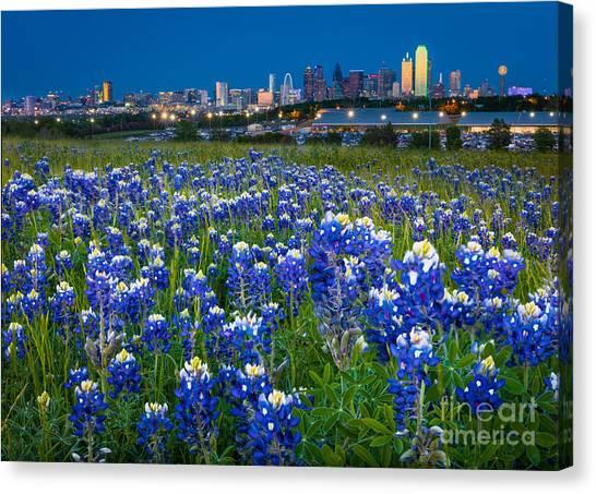 Bluebonnets In Dallas Canvas Print
