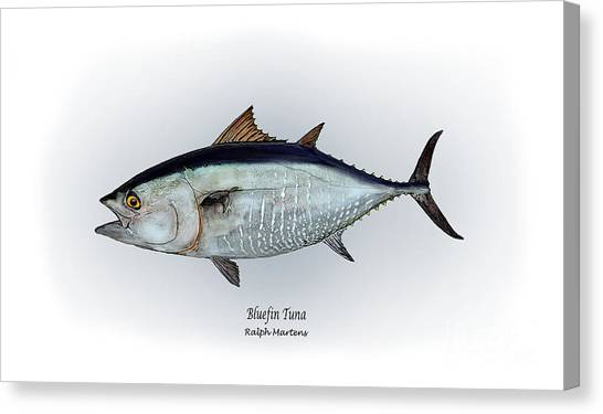 Angling Art Canvas Print - Bluefin Tuna by Ralph Martens