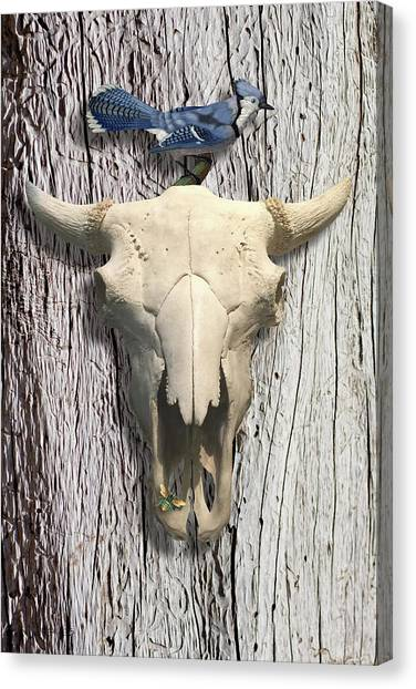Bluejay Canvas Print - Bluejay And The Buffalo Skull by Gary Grayson