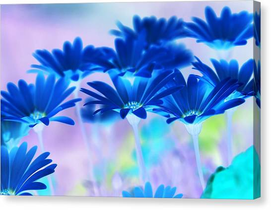 Bluemination Canvas Print