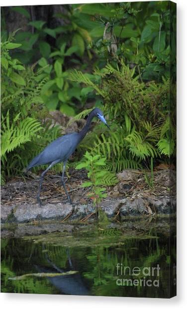 Blues' Lagoon Canvas Print