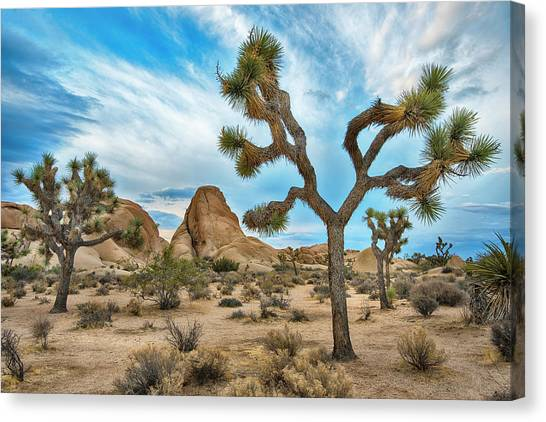 Mojave Desert Canvas Print - Blues Skies Over Joshua Tree National Park by Dave Dilli
