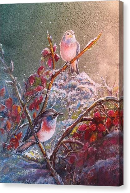 Bluethroat On The Tundra/ #3 Canvas Print