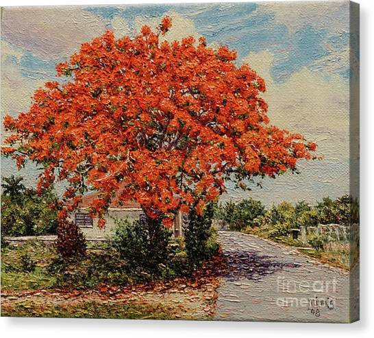 Bluff Poinciana Canvas Print