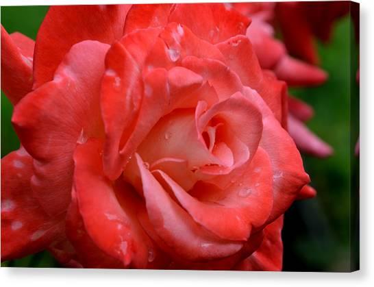 Blush After The Rain Canvas Print