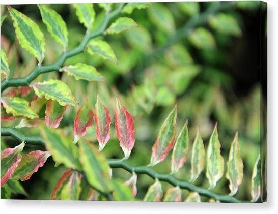 Blushing Leaves Canvas Print by Jessica Rose