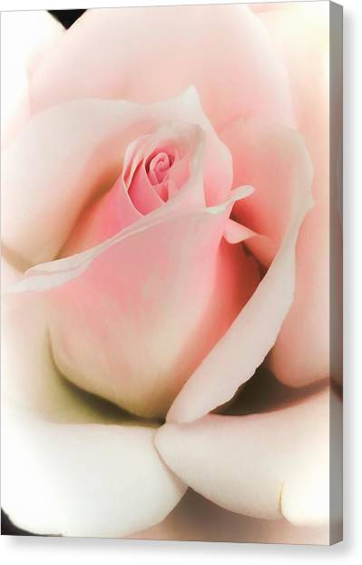 Blushing Petals Canvas Print