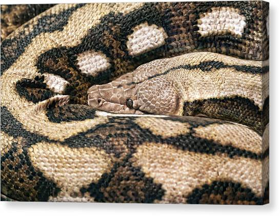 Boa Constrictor Canvas Print - Boa Constrictor by Tom Mc Nemar