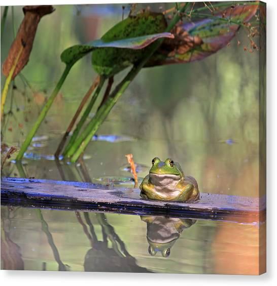 Bullfrogs Canvas Print - Boardwalk by Donna Kennedy