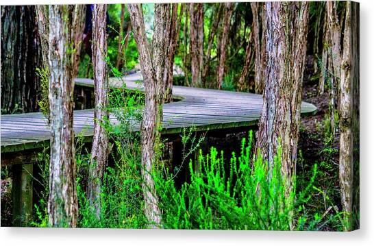 Boardwalk In The Woods Canvas Print