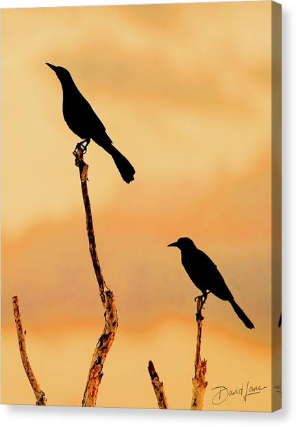 Boat Tailed Grackles Canvas Print