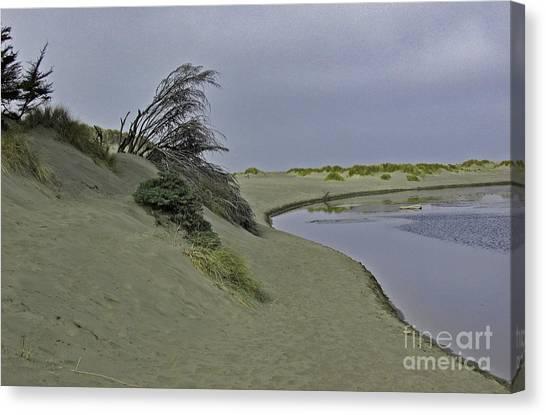 Bodega Dunes Canvas Print