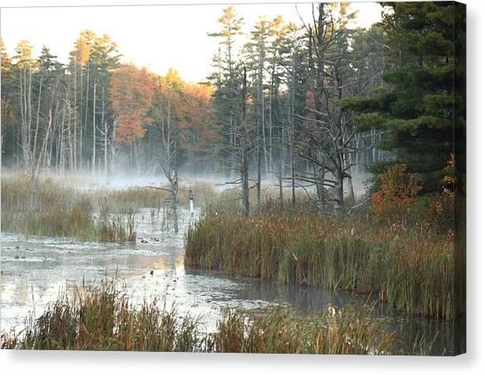 Bog Fog Canvas Print