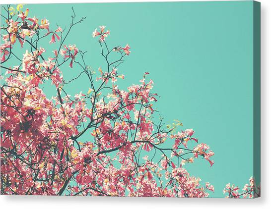 Cherry Blossom Canvas Print - Boho Cherry Blossom 1- Art By Linda Woods by Linda Woods