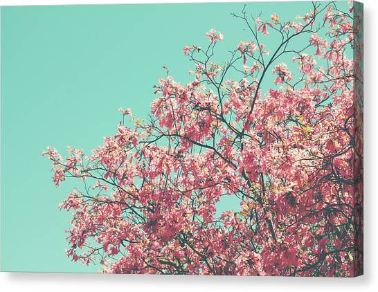 Cherry Blossom Canvas Print - Boho Cherry Blossom 2- Art By Linda Woods by Linda Woods
