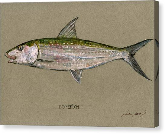 Fly Fishing Canvas Print - Bonefish by Juan  Bosco