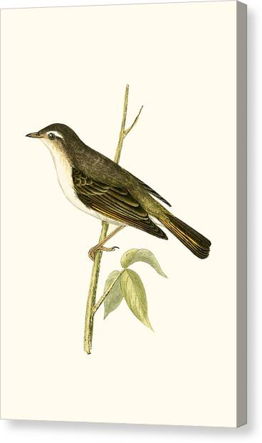 Warblers Canvas Print - Bonelli's Warbler by English School