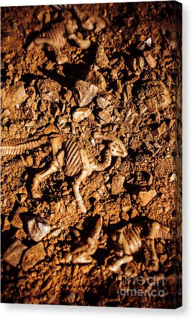 Geology Canvas Print - Bones From Ancient Times by Jorgo Photography - Wall Art Gallery