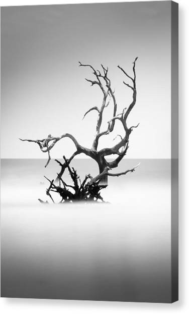 Bulls Canvas Print - Boneyard Beach X by Ivo Kerssemakers