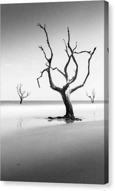 Bulls Canvas Print - Boneyard Beach Xiii by Ivo Kerssemakers