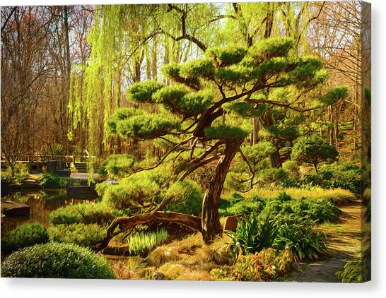 Bonsai Canvas Print