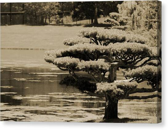 Bonsai Tree Near Pond In Sepia Canvas Print