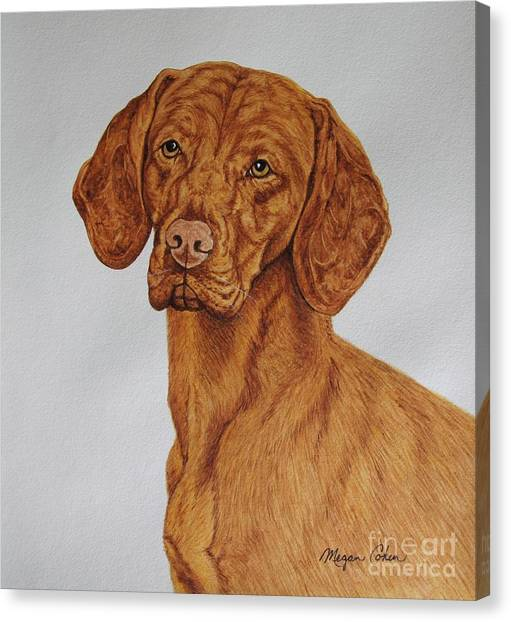 Canvas Print - Boomer The Vizsla by Megan Cohen