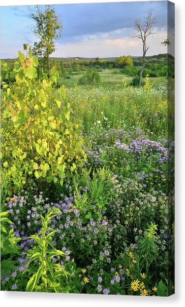 Prairie Sunrises Canvas Print - Boone Creek Wildflowers by Ray Mathis