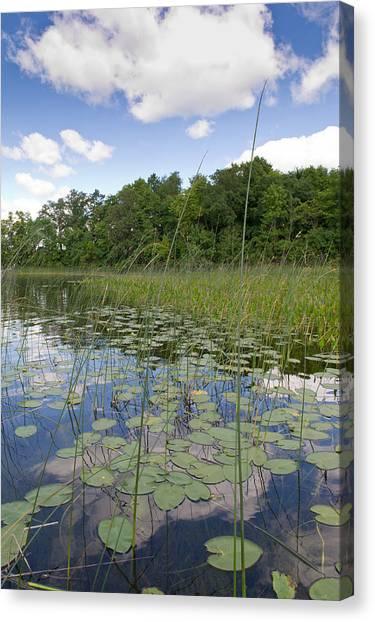 Borden Lake Lily Pads Canvas Print