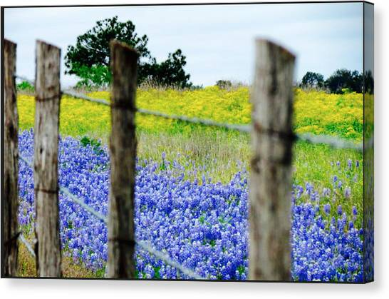 Border Blue Canvas Print