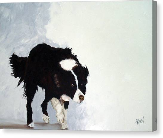 Border Collie Canvas Print by Dick Larsen