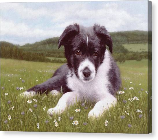 Border Collies Canvas Print - Border Collie Puppy Painting by Rachel Stribbling