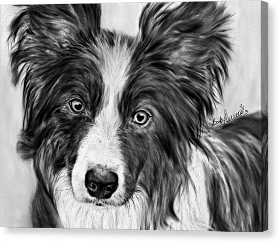 Border Collie Stare Canvas Print