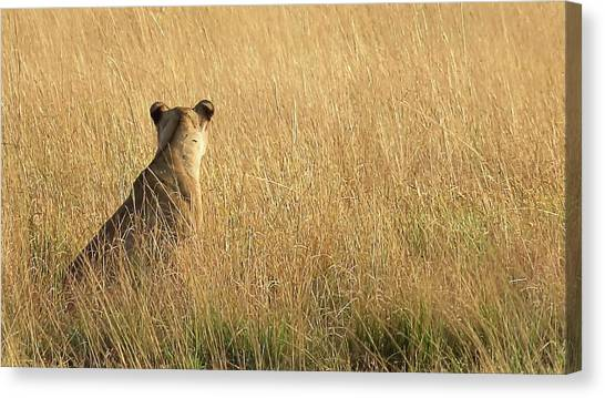 Born Free Canvas Print