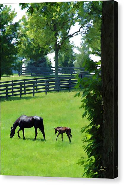 Born In Bluegrass 2 Canvas Print