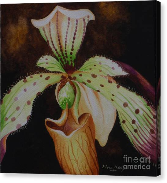Borneo Orchid P Lebaudyanum Canvas Print by Edoen Kang
