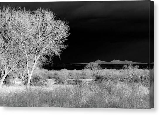 Bosque Del Apache - Infrared Canvas Print