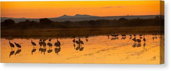 Bosque Sunrise Canvas Print