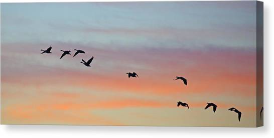 Canvas Print featuring the photograph Bosque Sunrise by Jean Clark