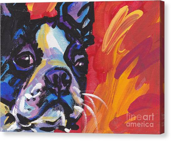 Boston Terriers Canvas Print - Boston Bean by Lea S