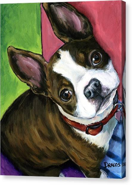 Boston Terriers Canvas Print - Boston Terrier Looking Up by Dottie Dracos