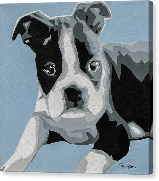 Boston Terriers Canvas Print - Boston Terrier by Slade Roberts