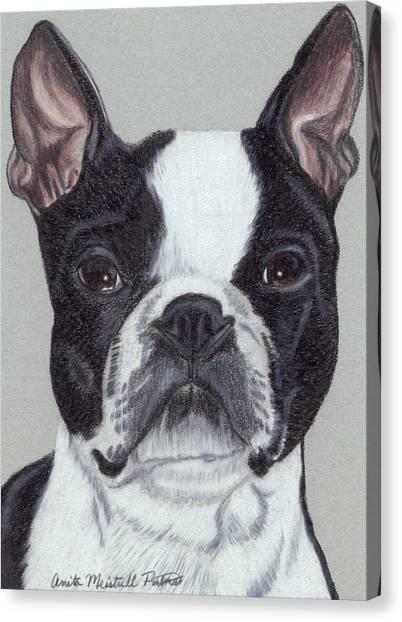 Boston Terrier Vignette Canvas Print