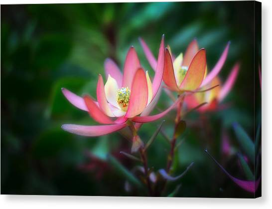 Botanic Garden Of Wales 1 Canvas Print