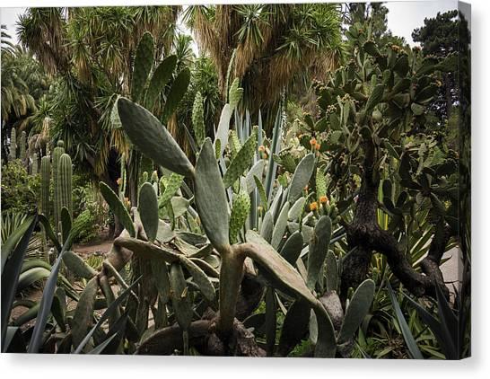 Botanic Garden Valencia Canvas Print