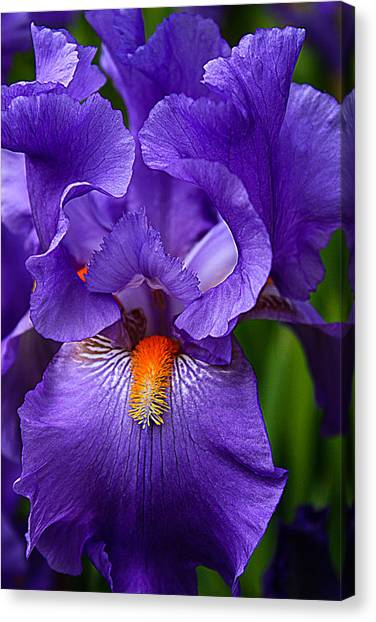 Botanical Beauty In Purple Canvas Print