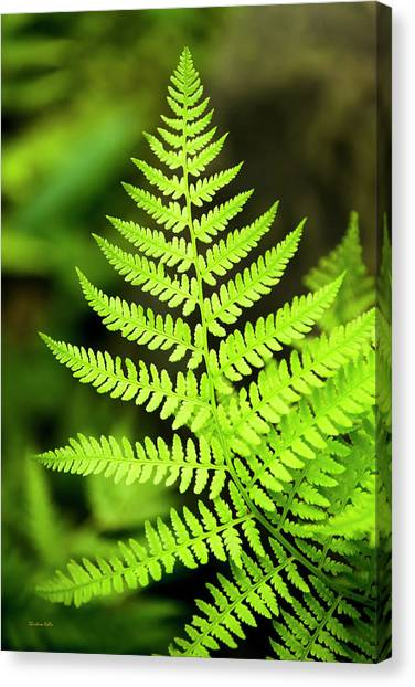 Botanical Fern Canvas Print