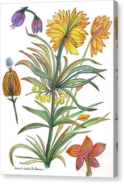 Botanical Flower-53  Yellow Flower Canvas Print by Julie Richman