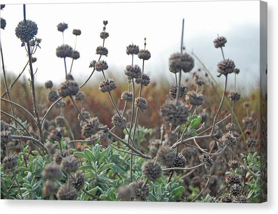 Botanical Towers Canvas Print by Jean Booth